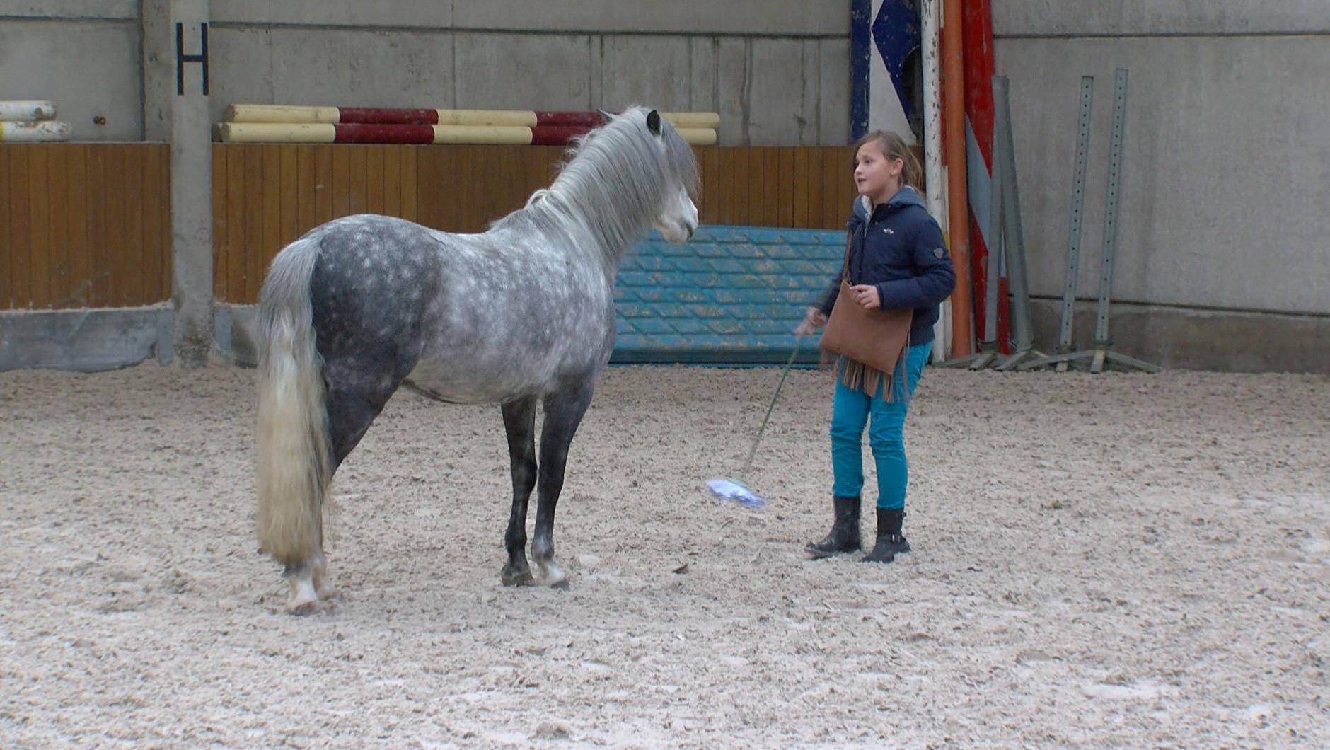 Concours équestre Equistar à Paris : la lauréate originaire de Warchin