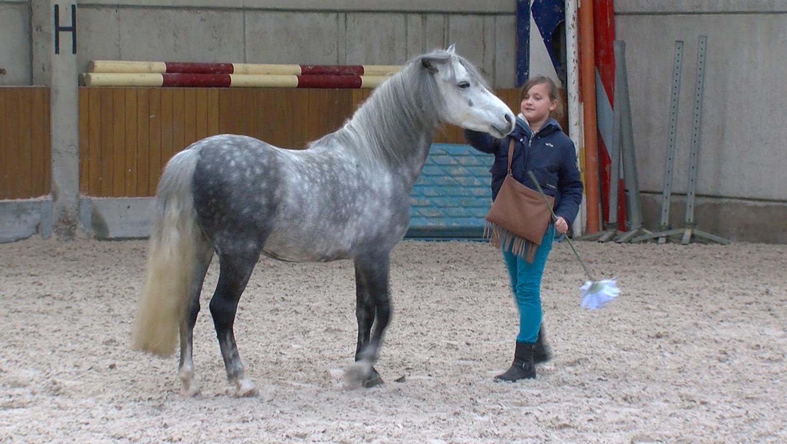 Une jeune cavalière de Warchin en vedette au Salon du Cheval de Paris