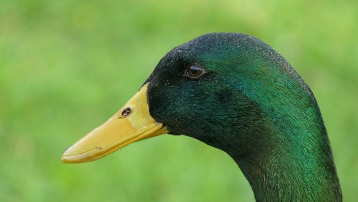 Ivres, 5 Mouscronnois tuent des canards avant de commettre un vol