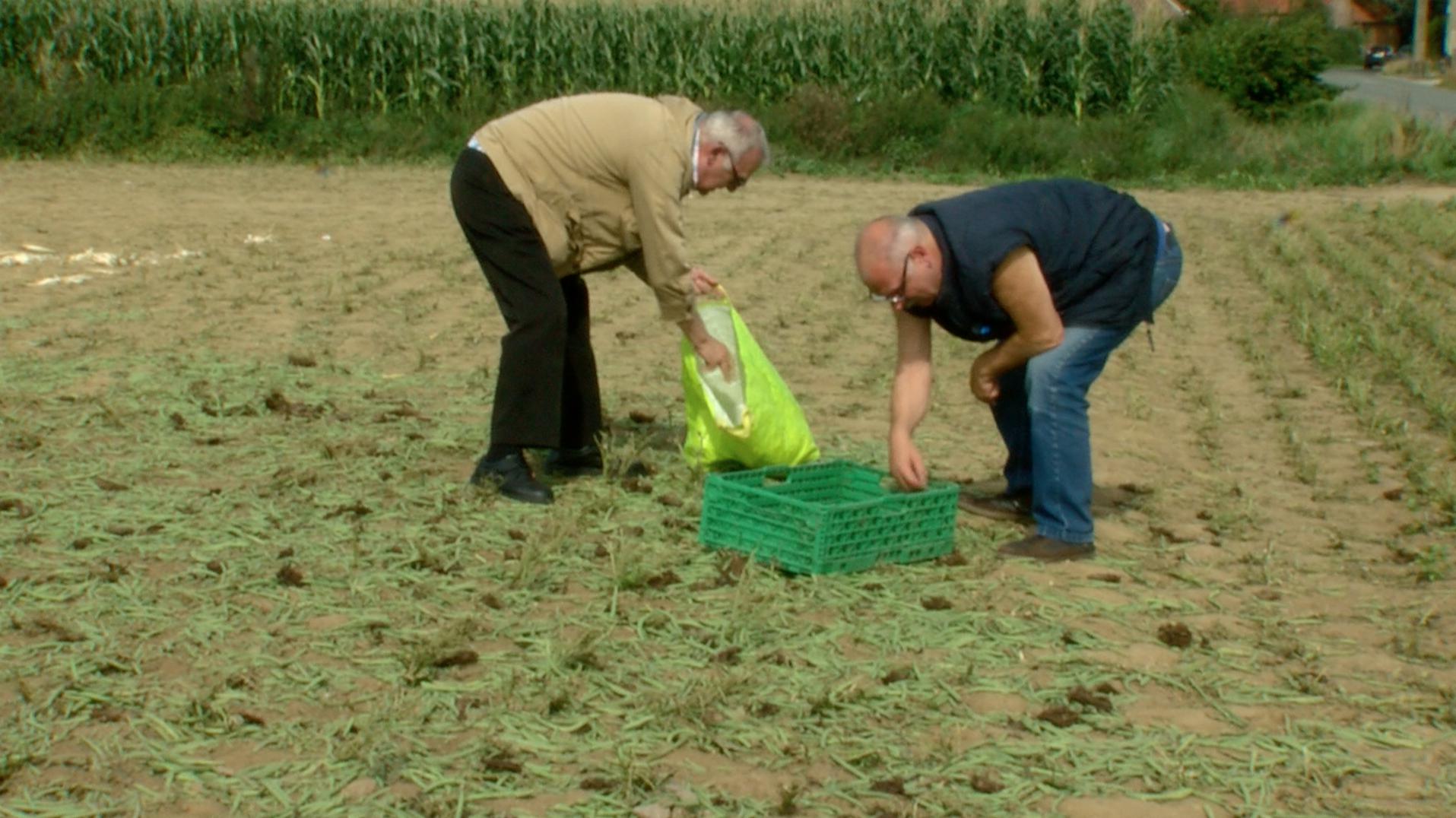 Un agriculteur donne 12 tonnes de haricots gratuits