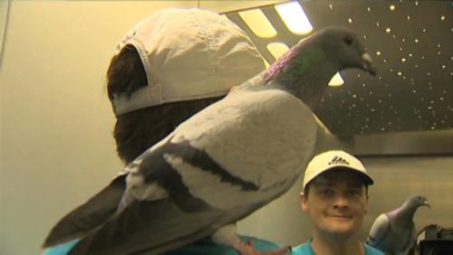 Transactua : le pigeon Birdy