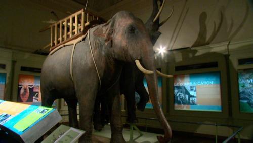 Les animaux et la guerre : expo prolongée
