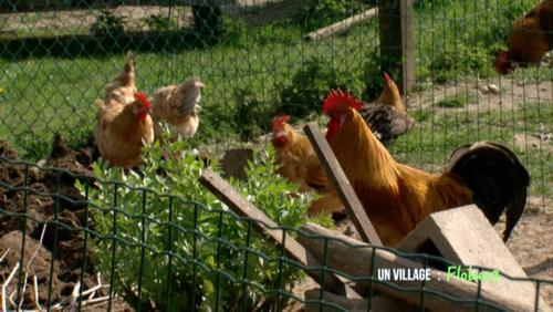 Des poules à Go-go
