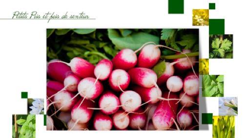 Différents légumes et condiments à planter