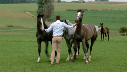 Portrait d'un éleveur de chevaux participant au concours de Ghlin
