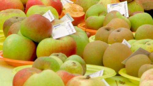Les pommes et les poires
