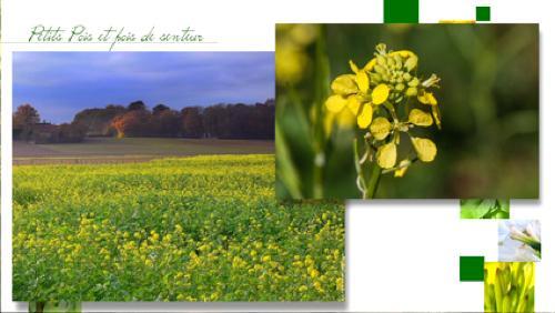 Les engrais vert
