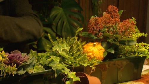 Comment bien planter une jardinière