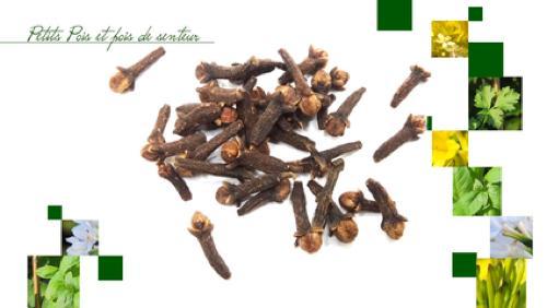 Les épices dans le vin chaud: Les clous de girofle