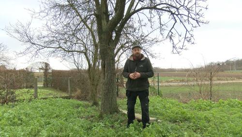 Voici comment entretenir les arbres fruitiers en hiver
