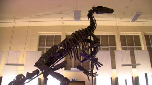Nouvel espace touristique au musée de l'Iguanodon