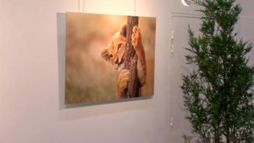 Deux expositions photos à Mouscron