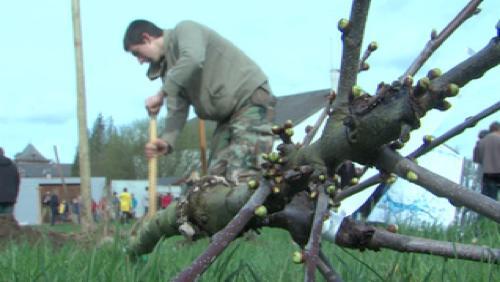 Un arbre pour la Wallonie Picarde : 350 000 arbres plantés en 10 ans