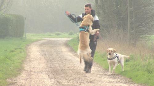 Dog Trotteur : une société au service de nos animaux de compagnies
