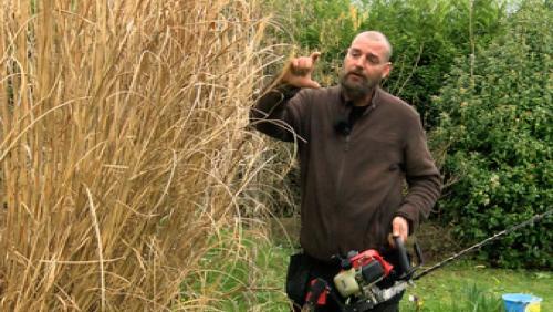 Comment bien s'occuper de sa pelouse