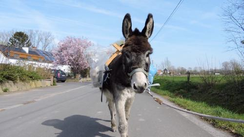 Mojito, l'âne porte-cannettes
