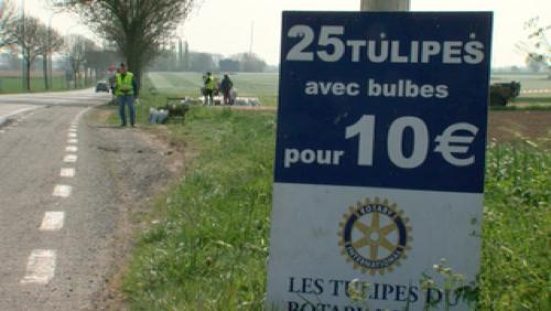 Le rotary club d'Ath propose des tulipes pour la bonne cause