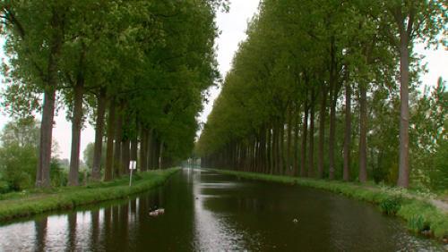 Bientôt 1.600 arbres abattus le long du canal de l'Espierres