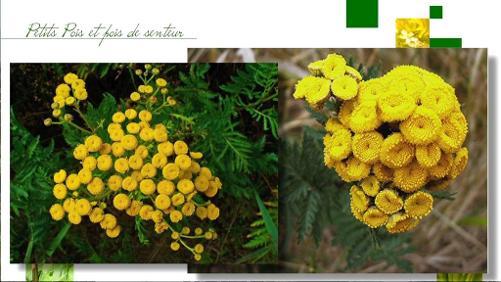 Les remèdes naturels, fortifiants et répulsifs, quelles plantes utiliser et leurs propriétés