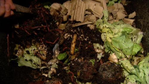Les vers de terre s'occupent de vos déchets organiques à la maison