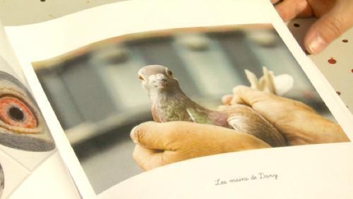 Une photographe et des colombophiles