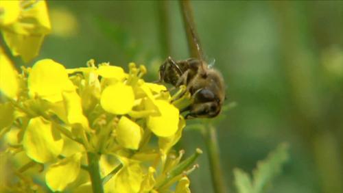Maison de l'Abeille: Les abeilles ont faim !