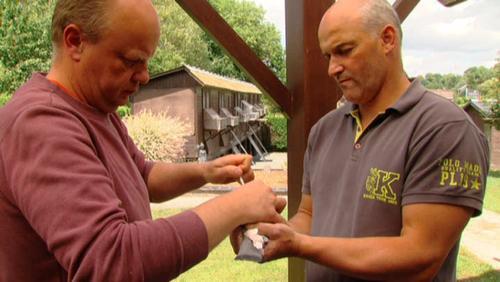 Colombophile: vaccination des pigeons (2)