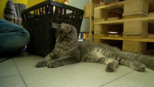 La Miaulerie, un bar à chats à découvrir