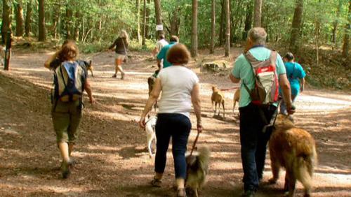 Une marche pour chiens et maîtres