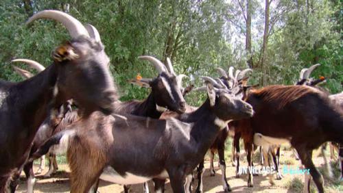 La chèvrerie de Graux, un changement de vie