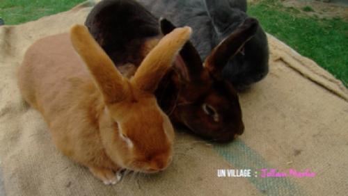 Les beaux lapins de Merlin !