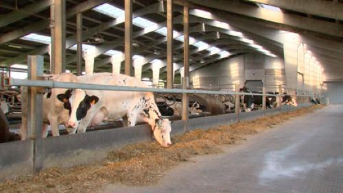 Week-End Wallonie Bienvenue à Pecq: les inscriptions se clôturent le 20/09