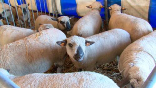 Les familles en nombre à la foire agricole de Frasnes