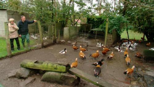 Les canards, le péché mignon des Fleurquin