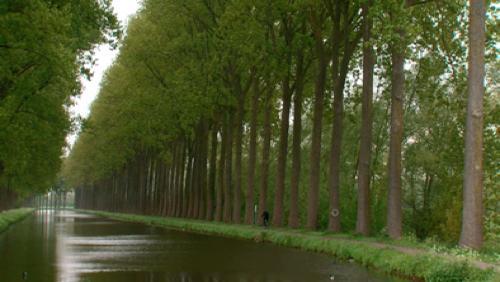 Bientôt l'abattage des peupliers du canal de l'Espierre