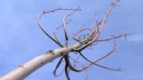 Plantons un arbre en Wapip