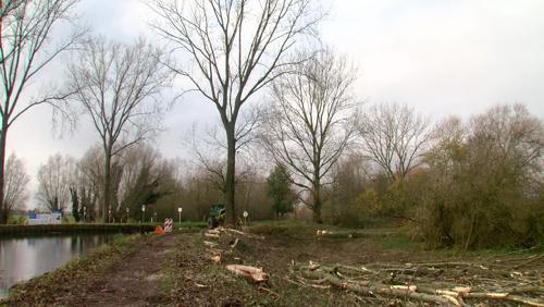 Les premiers arbres abattus le long du canal de l'Espierre