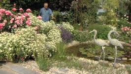 Quelles plantes choisir autour d'un bassin