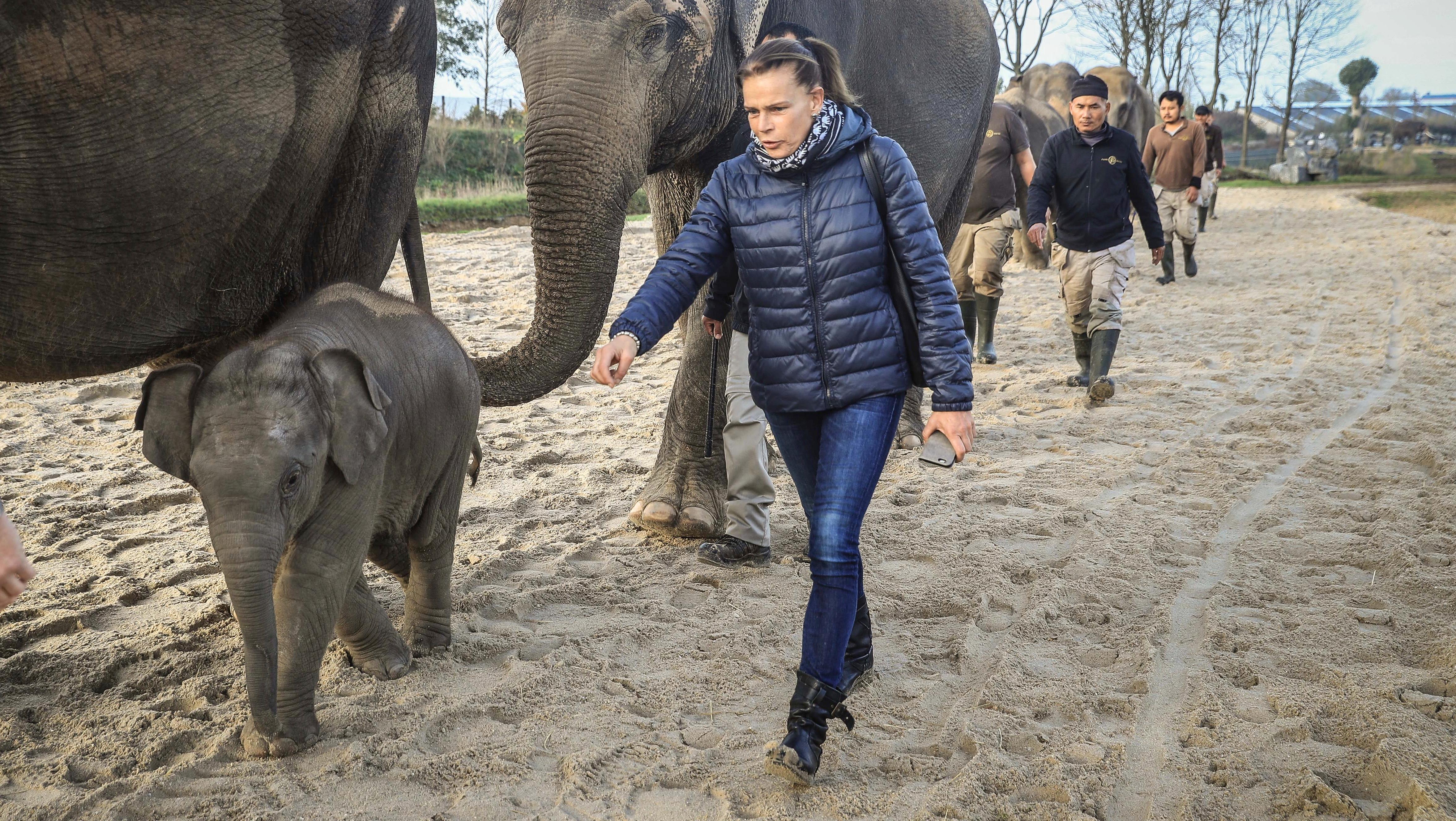 Stéphanie de Monaco, marraine de Ta Wan, éléphanteau de Pairi Daiza