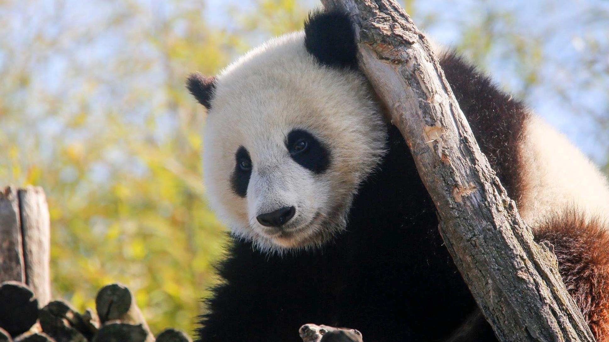 Pairi Daiza élu meilleur zoo d'Europe