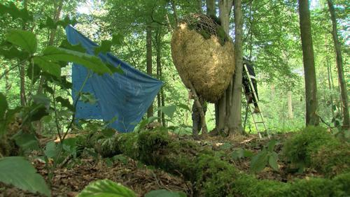 A la recherche d'oeufs de Dragon dans les bois de Bonsecours