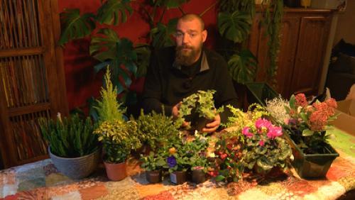 les diff rentes plantes mettre en jardini res. Black Bedroom Furniture Sets. Home Design Ideas