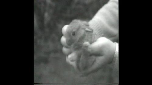 "Ecoutez ""El lapin du lindi perdu"" d'Albert Coens"