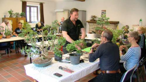 Un club de bonsaïs à Enghien