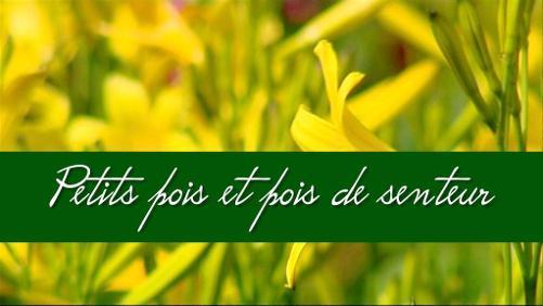 """""""A la Sainte Catherine, tout bois prend racines"""" vrai ou faux ?"""
