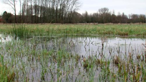 Les zones humides: un écosystème menacé