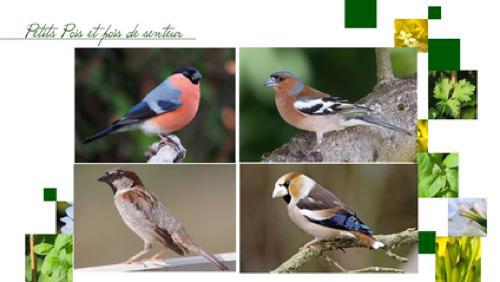 Comment nourrir les oiseaux ?