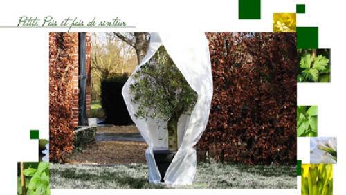 Les effets du gel au jardin