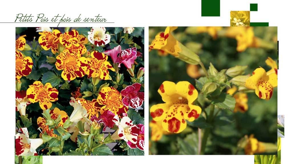 Les plantes à fleurs au jardin potager
