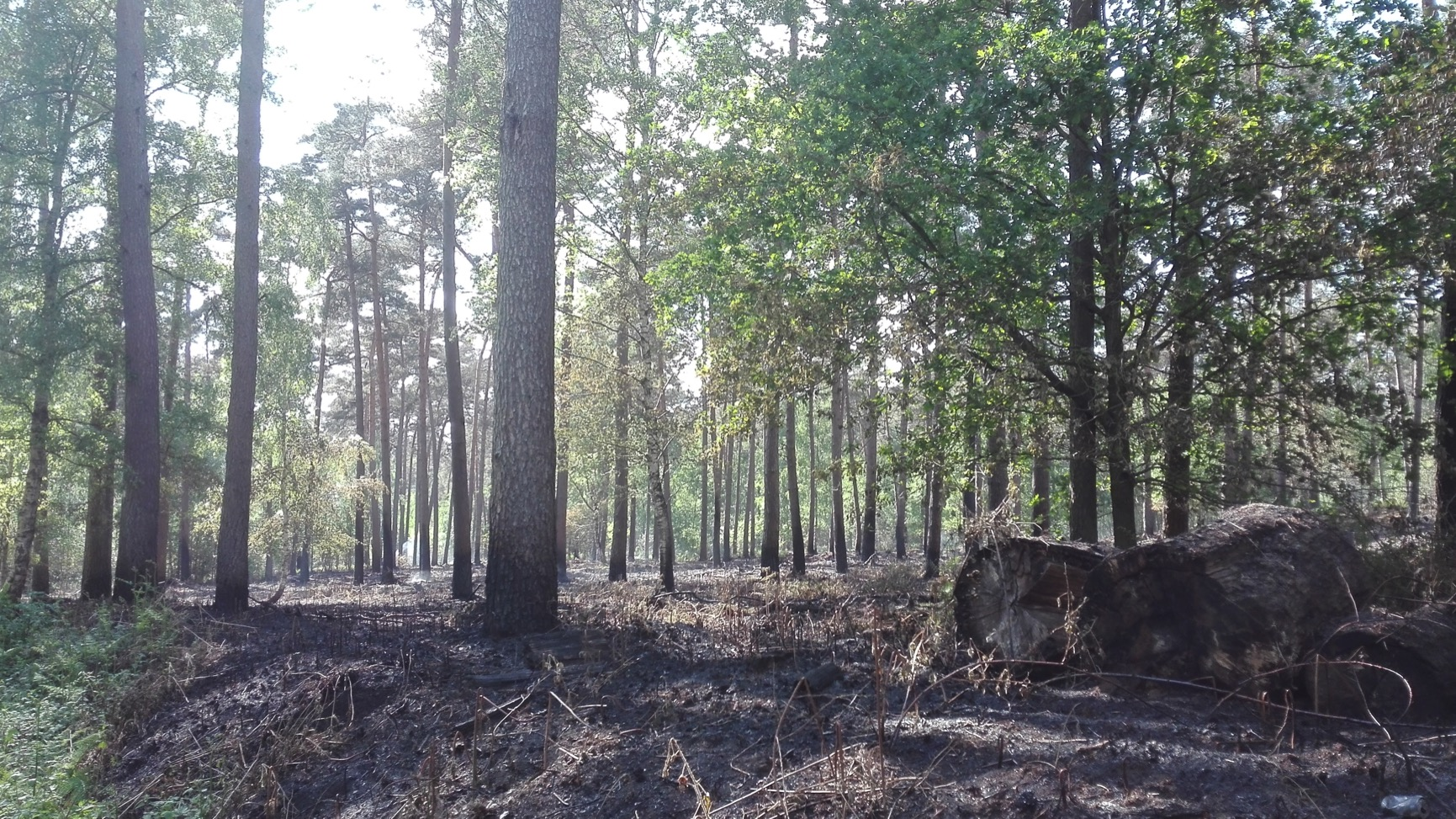 Feux de forêt à Stambruges